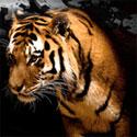 Win a free tiger promo